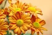květiny v zahradě s rozostření pozadí