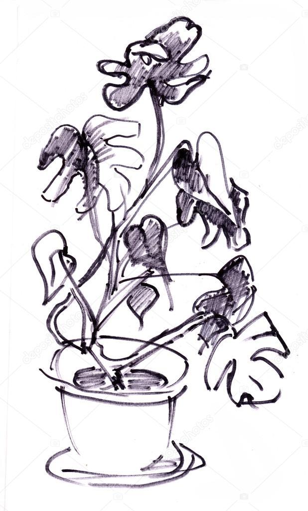 Instant sketch, planta — Fotos de Stock © krimzoya #93892014