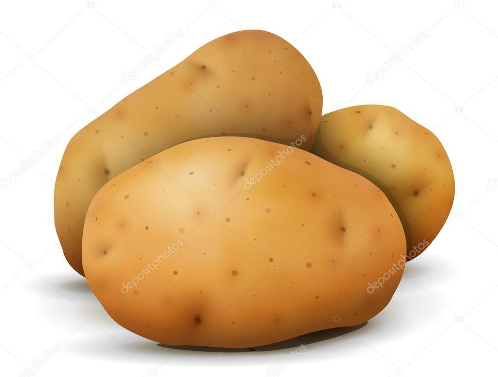 vector patata cerca de mont n de tub rculos de patata vector de rh sp depositphotos com