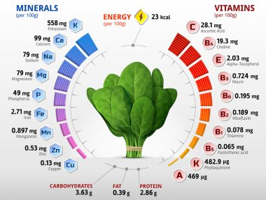 Vitamins and minerals of spinach leaves