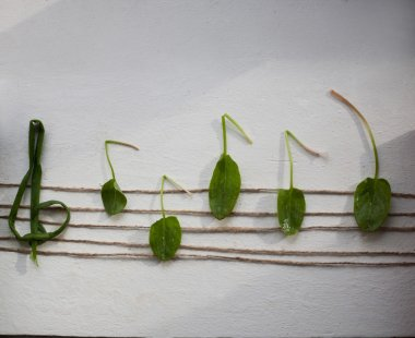 Musical note from green leaves, white background