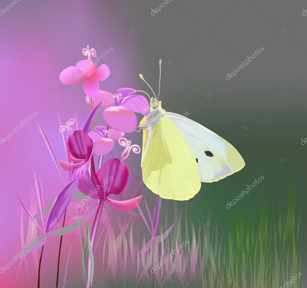 Butterfly on Ivan-tea