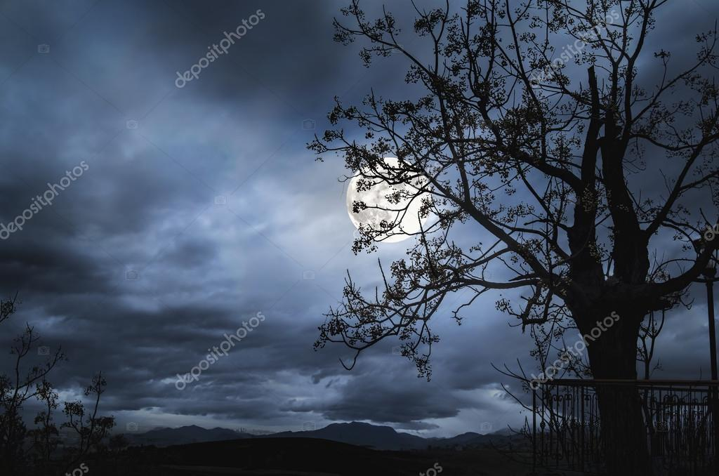 dark night with  tree, full moon