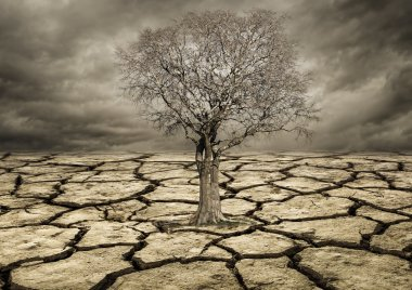 Global warming concept. Lonely  tree under dramatic Clouds