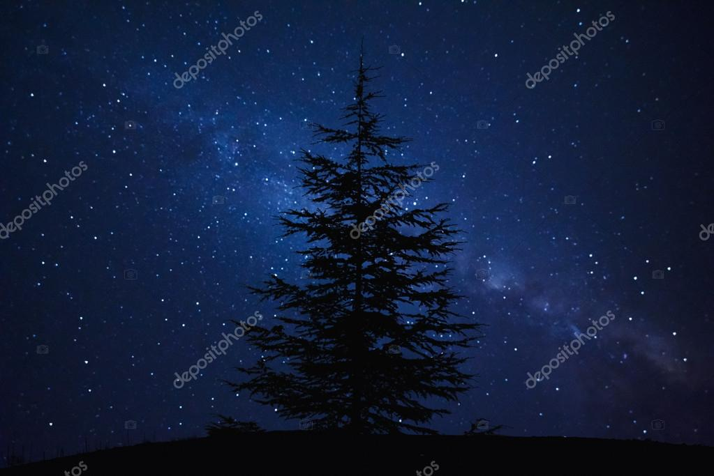 Silhouette of Pine Tree and Milky Way