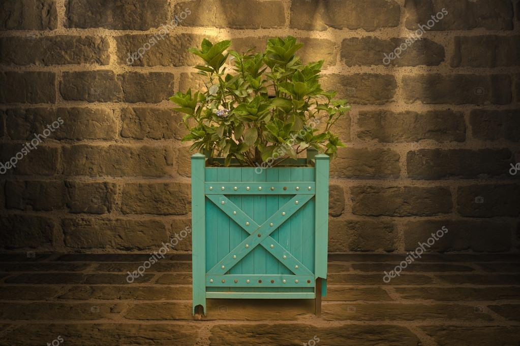 outdoor plant isolated on a wall background