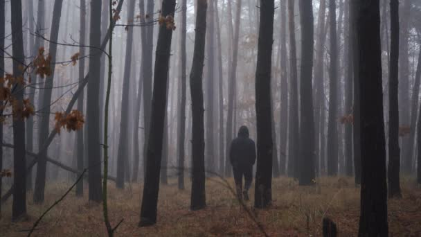 a man in a deep forest walks into the depths of the fog