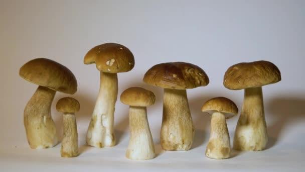 Gruppe der braunen Kappe Boletus Edulis isoliert auf weißem Hintergrund. Essbare Pilze in der Küche. Niemand
