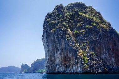 Flora and fauna of the tropical Phi Phi islands in Thailand