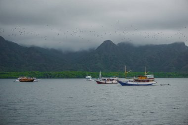 Ships in the bay and a flock of flying foxes flying from one island to another