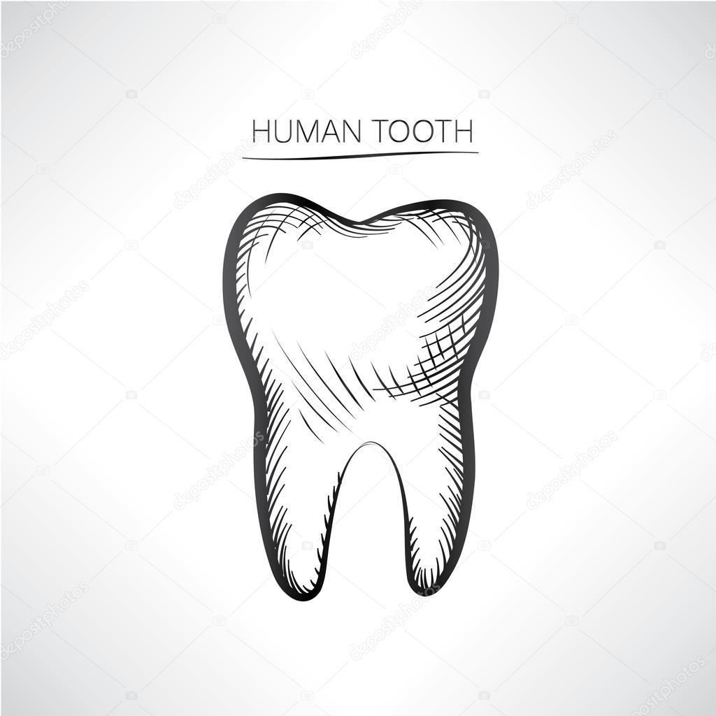 Skizze der menschlichen Zahn — Stockvektor © YokoDesign #83665886