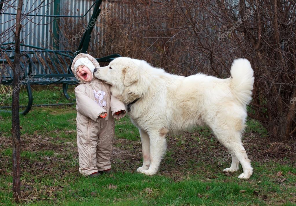 petite fille mignon bambin jouant avec son gros chien de. Black Bedroom Furniture Sets. Home Design Ideas