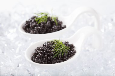 White spoons with natural sturgeon caviar and dill on ice cubes.
