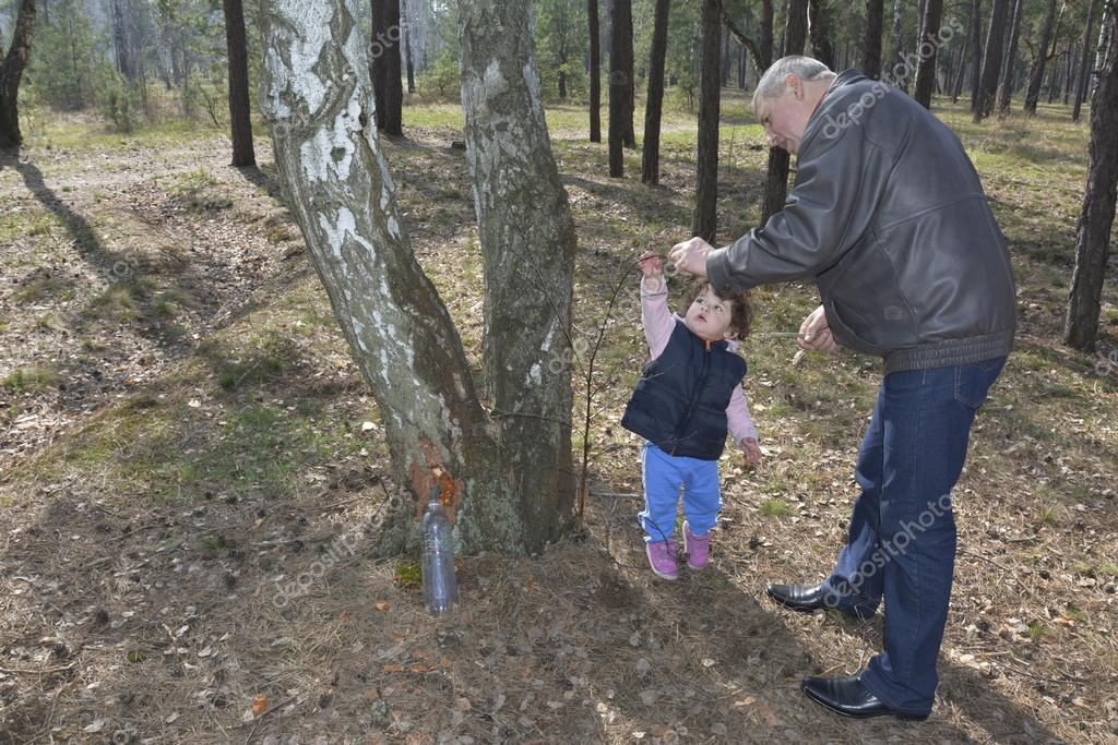 Grandfather showing granddaughter how birch sap is flowing in th