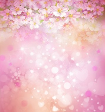 blossoming sakura tree