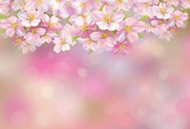 blossoming sakura tree