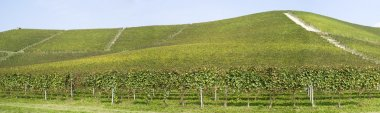 Vineyards on the hills of Langhe