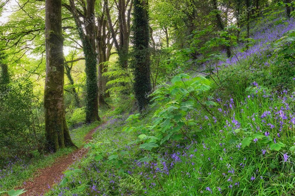 Фотообои Woodland Path