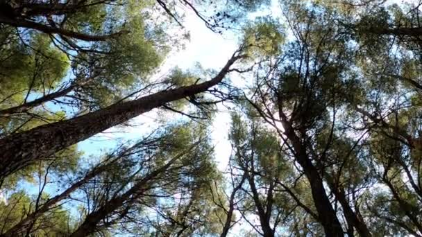 Blick aus dem tiefen Winkel des Waldes, klarer Himmel, Wolken und Sonnenlicht