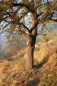Starý strom bez listí