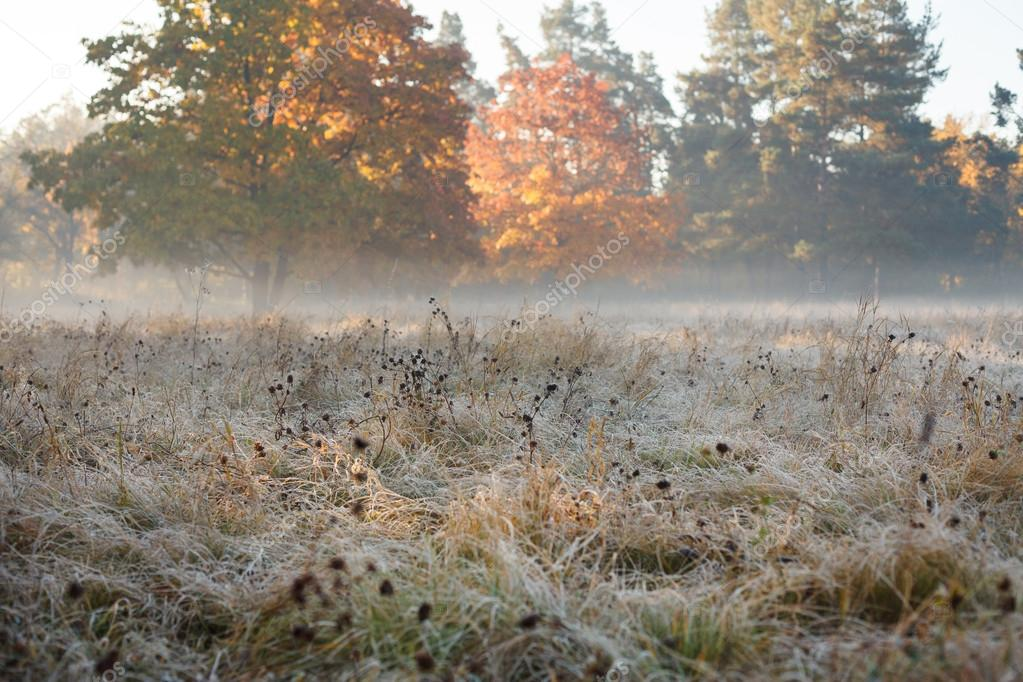Autumn fields in hoarfrost