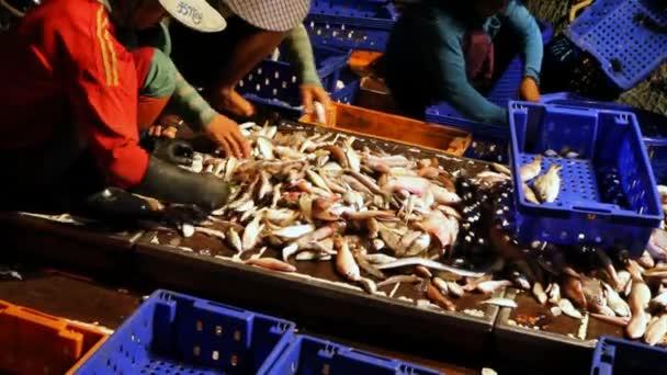 třídění ryby v lodi