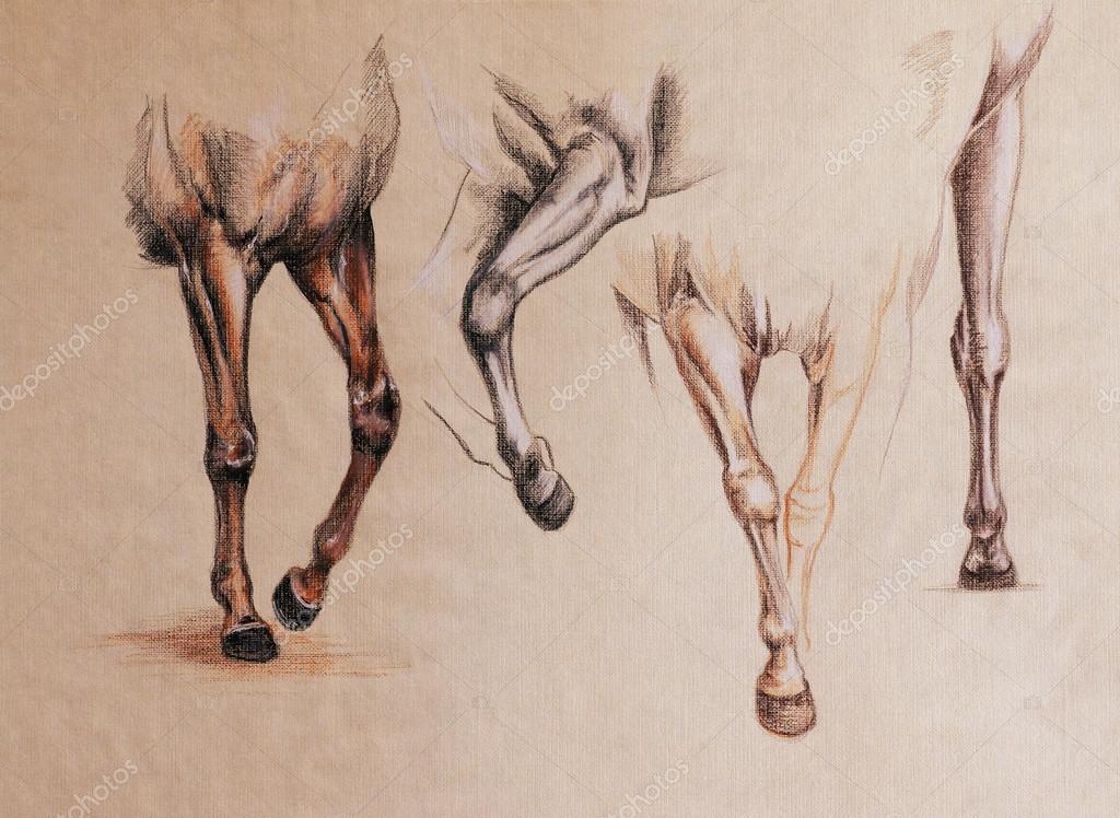 Horse Legs Study Stock Photo Cattallina 92466600