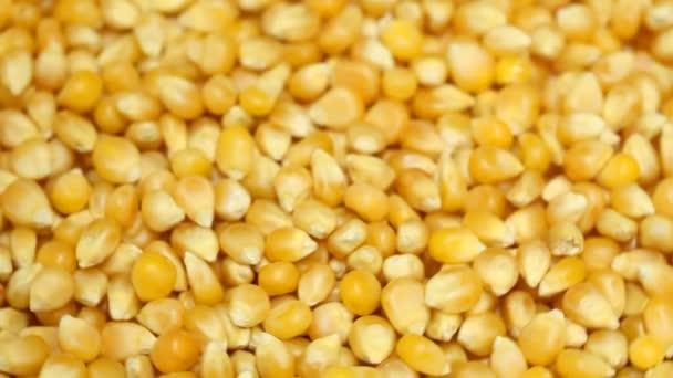 Kukuřice 1