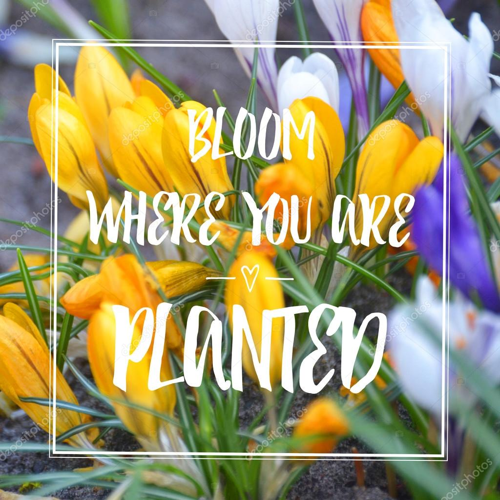 Spring design handwriting lettering quotes blooming flowers spring design handwriting lettering quotes blooming flowers spring blurred background with crocuses mightylinksfo