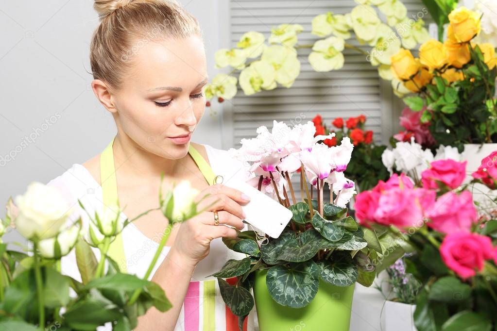 Cyclamen belle floraison en pot photographie - Arrosage cyclamen en pot ...