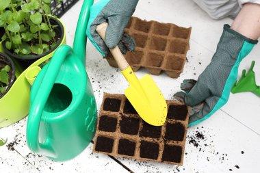 Seeds, gardener prepares the seedlings
