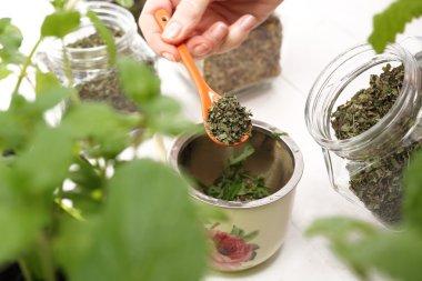 Steaming herbs. green tea