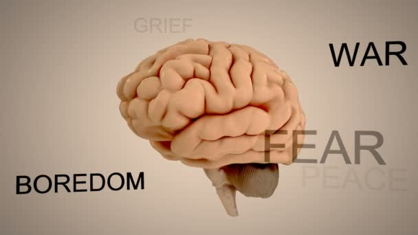 Human brain and certain parts
