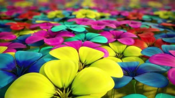 pole barevných květin