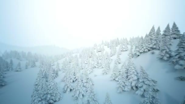 zimní snow krajina