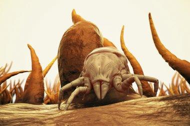 3d Render Of Dust Mite. Allergy House Hygiene Bed