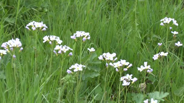 Small white flowers shine brightly in the thick green grass in the small white flowers shine brightly in the thick green grass in the meadow stock mightylinksfo