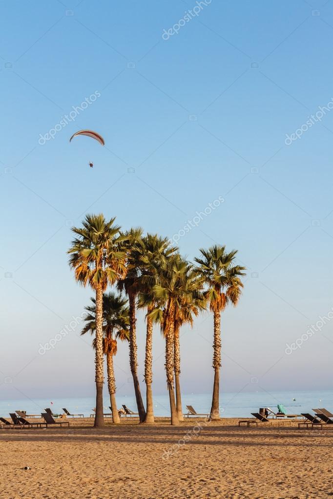 palm trees on a beautiful beach