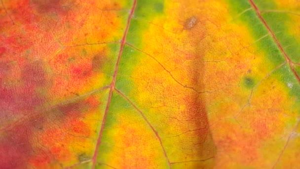 Detail barevné podzimní listí