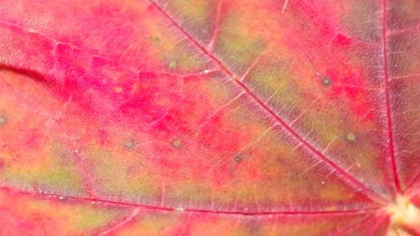 Detail červený list