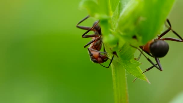 Two ants in the grass