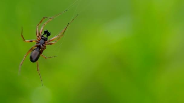 Pavouk v zelené trávě