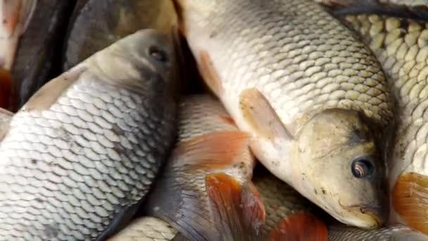 Sběr ryb na podzim