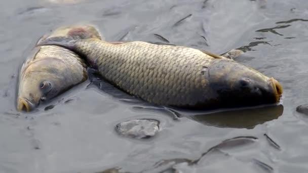 Betakarítás halak a tóban