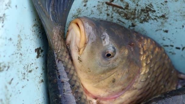 Podrobné zobrazení ryb