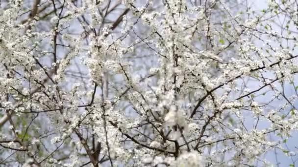 Keře kvetou na jaře
