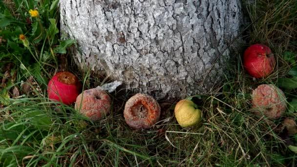 LES LUTTES EN FRANCE vers la restructuration politique (Gilets jaunes) : les débats continués 17 déc.- mars 2019 Depositphotos_84909148-stock-video-rotten-apples-under-the-tree