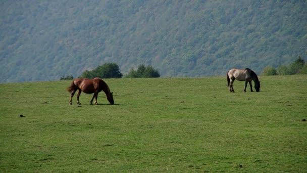 Zwei Pferde auf einer Wiese