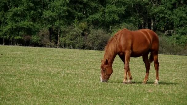 hnědý kůň na zelené louce
