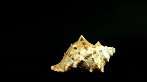 Shell auf schwarzem 4k Filmmaterial